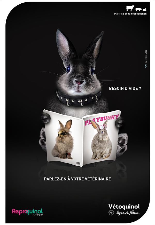 Reproquinol-V2-Play-Bunny